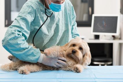 Consejos para saber elegir al mejor veterinario