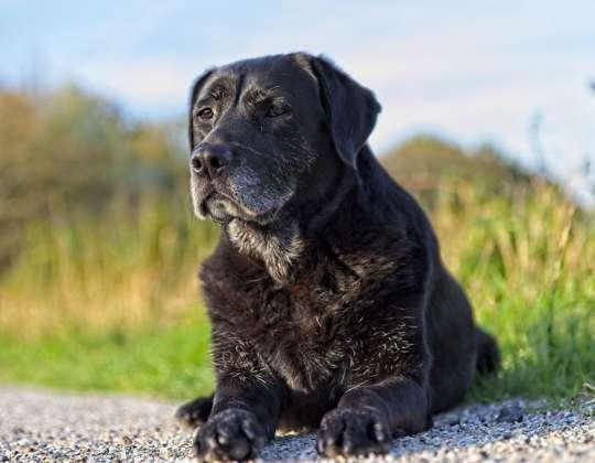 ¿Por qué hacer un chequeo geriátrico a tu mascota?