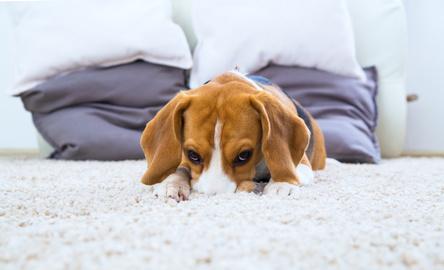 Consejos útiles a la hora de elegir una mascota