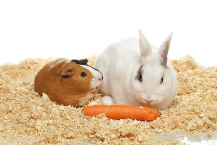 Animales exóticos, la importancia de confiar en un veterinario especialista