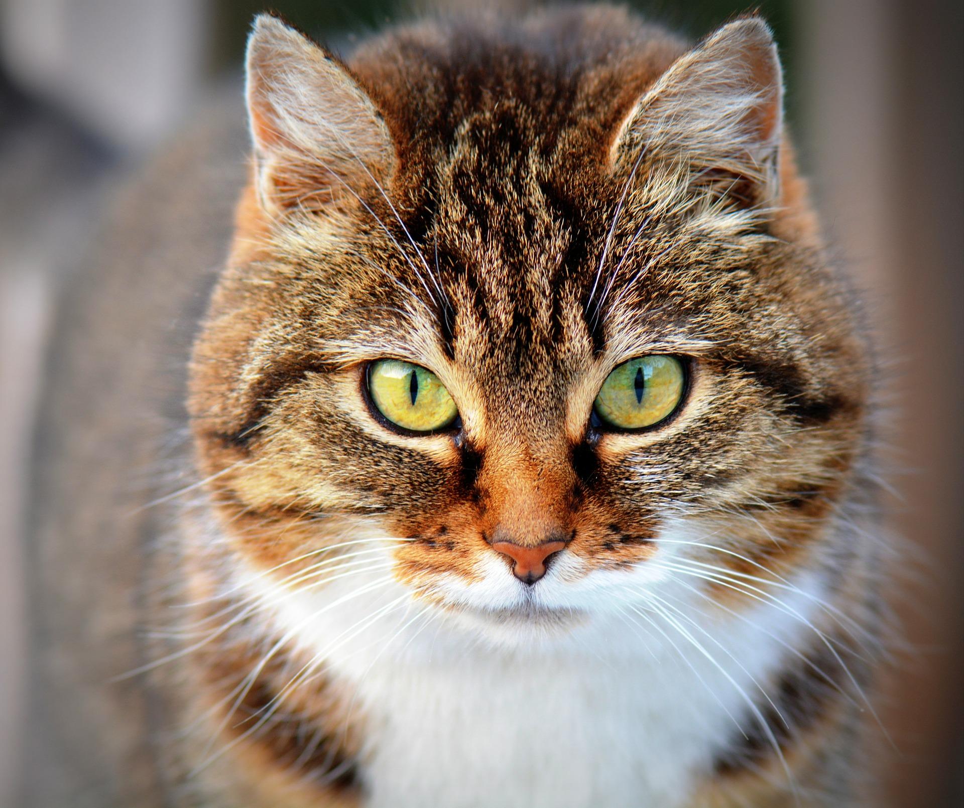 Las 3 claves para cuidar el pelo y la piel de tu gato