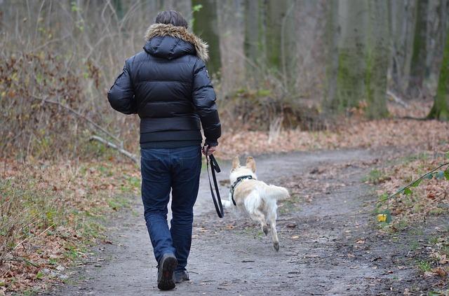 5 errores que solemos cometer en la educación de los perros.