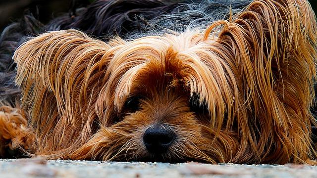 Vacunas y calendario de vacunación para perros en Valencia