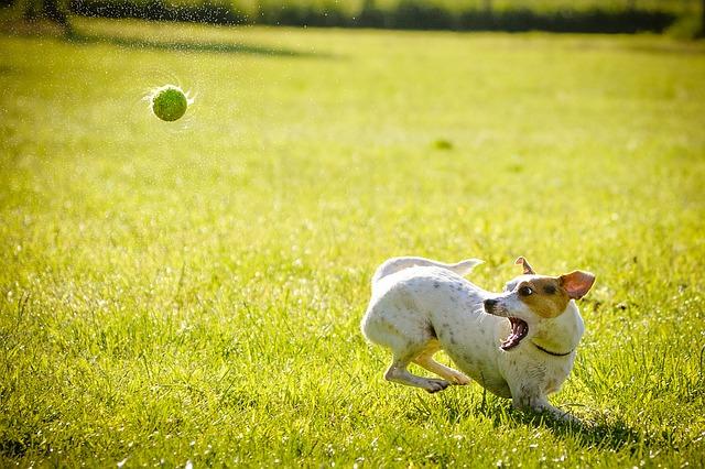 7 errores muy comunes que cometemos en el trato con nuestros perros