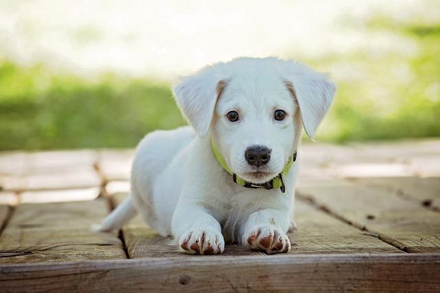 Consejos para perros recién adoptados