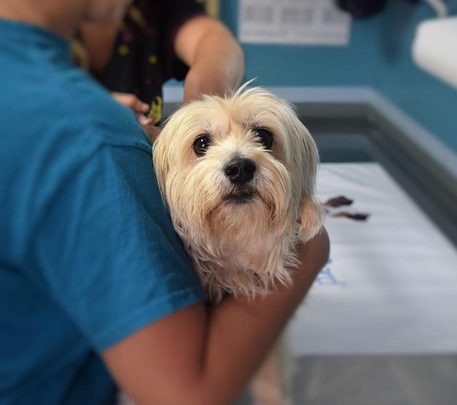 4 servicios veterinarios que nos diferencian de otras clínicas veterinarias de Valencia