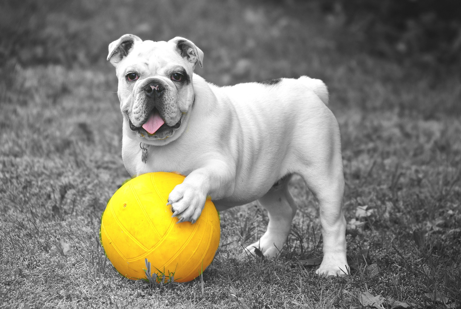 La importancia de jugar con tu mascota