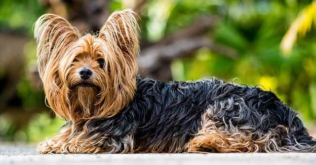 Esterilización canina: ventajas e inconvenientes para tu perro