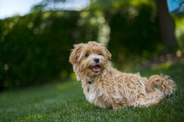 Viajar con mascotas en vacaciones: Consejos que has de tener muy en cuenta