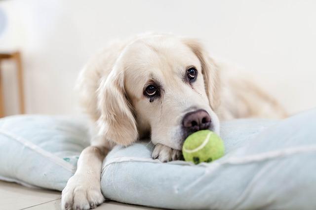 Cómo afrontar la depresión post-vacacional en nuestros perros
