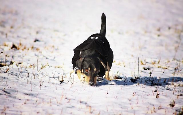 Consejos para cuidar a tu perro o gato durante el invierno