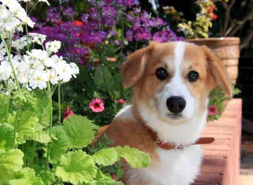 Cómo afecta la primavera a nuestros perros