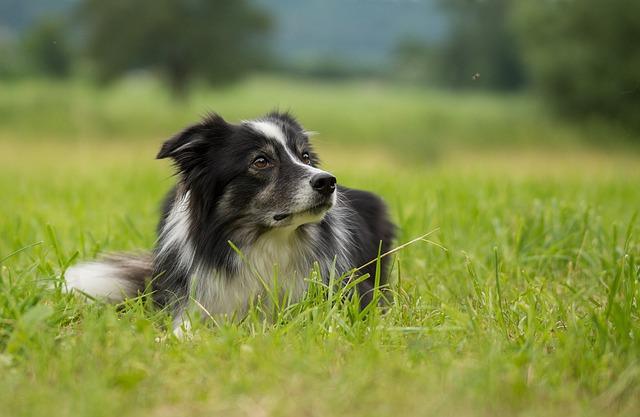 Cómo evitar parásitos y picaduras en perros y gatos esta primavera