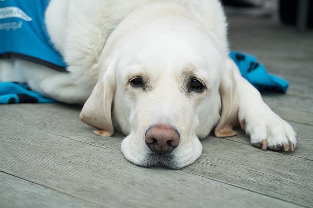 10 aspectos a tener en cuenta a la hora de elegir una clínica veterinaria de confianza.