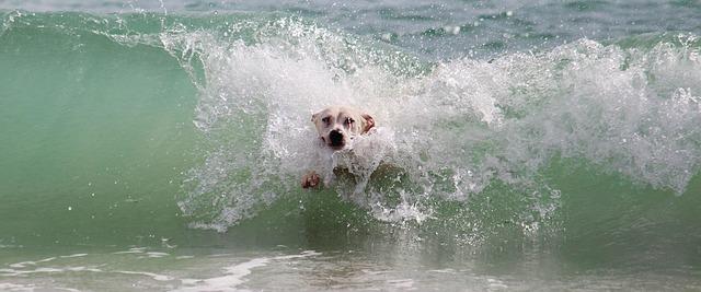 Cómo proteger a mi mascota del calor