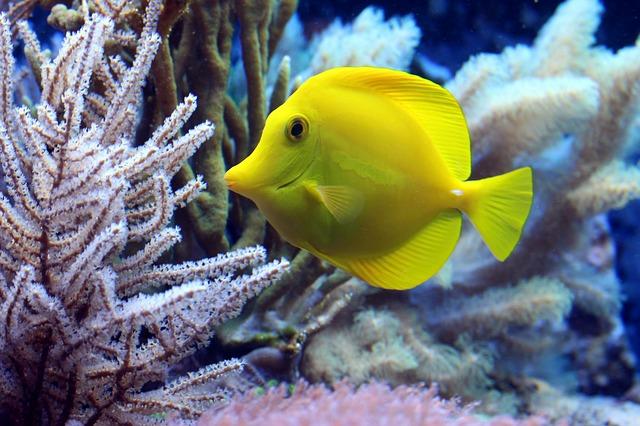 Cómo cuidar de tu pez doméstico: la importancia del acuario y cómo alimentarlo