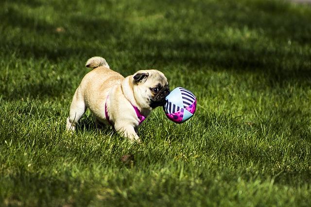 Consejos para educar a tu perro. Trucos de adiestramiento canino.