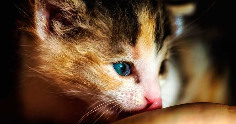 Los cuidados especiales para un gato recién nacido.
