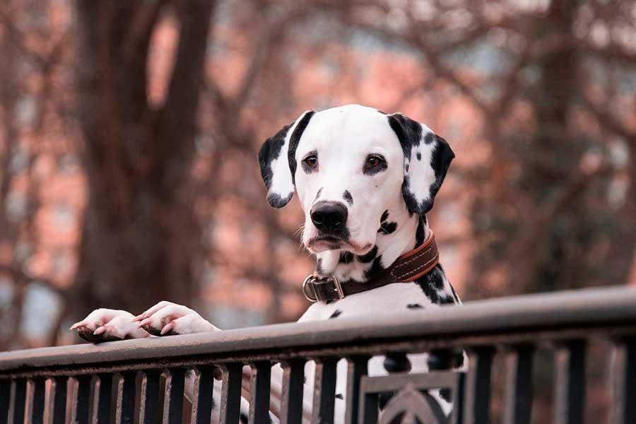 Castrar o esterilizar a tu mascota: ¿es buena idea?