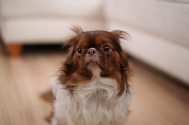 Consejos para calmar a tu perro del ruido de los petardos y mascletàs.