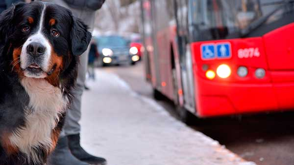¿Cómo viajar con tu mascota en el autobús de la EMT de Valencia? – Tarjeta EMT Mascota.