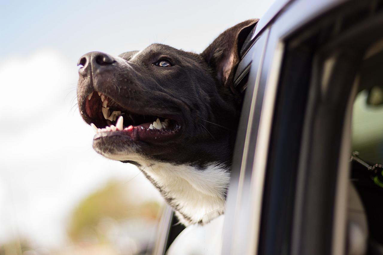 ¿Cómo inscribir a mi mascota en el censo canino de Valencia?