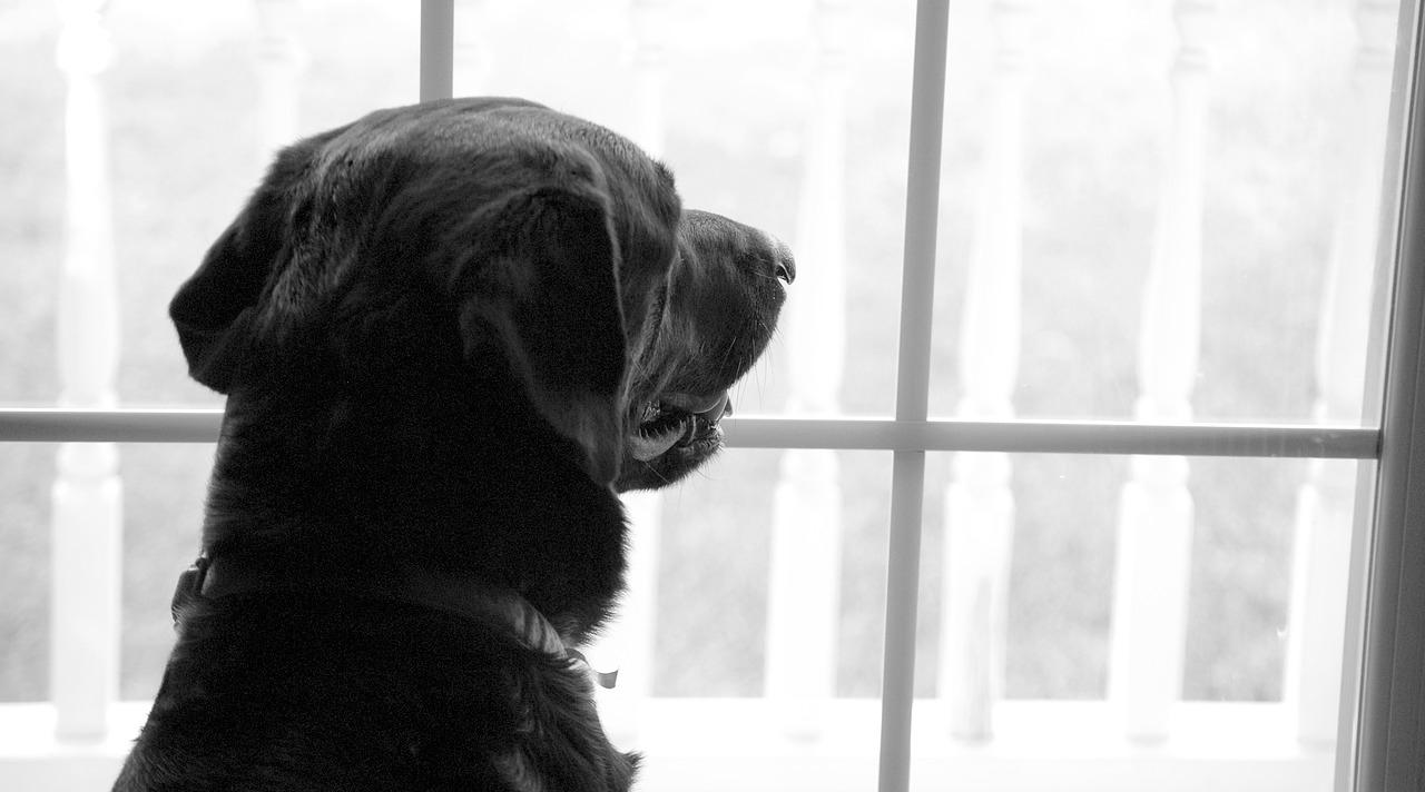 Dejar a tu perro solo en casa. ¿Cómo entretenerlo para que no se estrese?