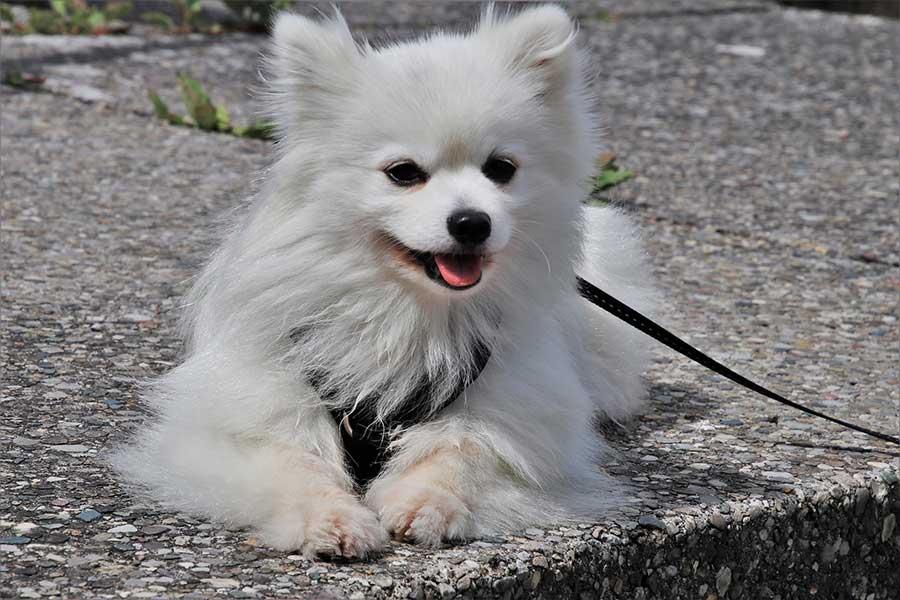 4 consejos fáciles para pasear a tu perro tranquilo.