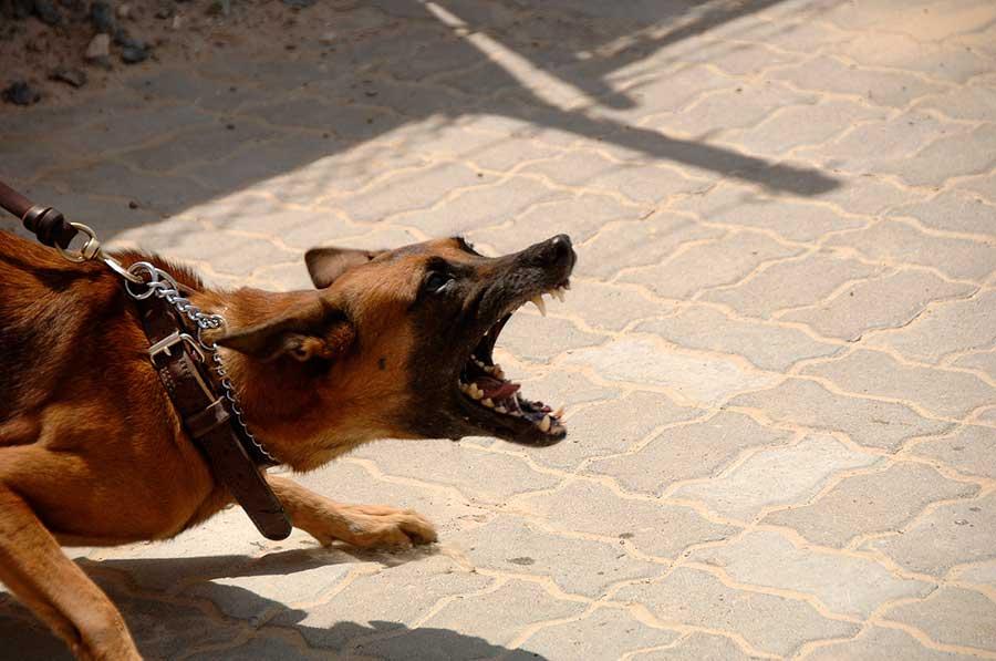 Mordedura de perro en Valencia: ¿Qué pasa si mi perro muerde a alguien?