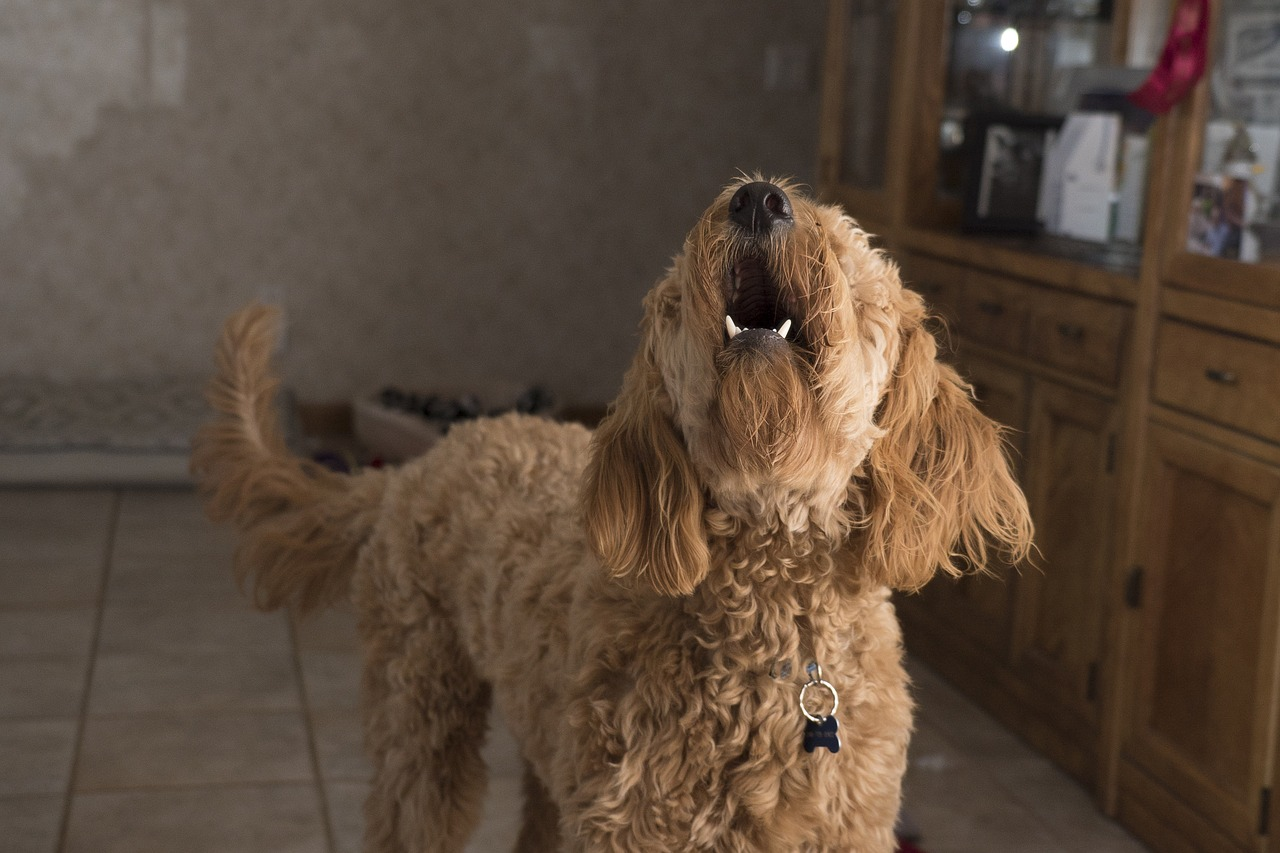 Ansiedad por separación: ¿Qué hacer si tu perro ladra cuando se queda solo en casa?