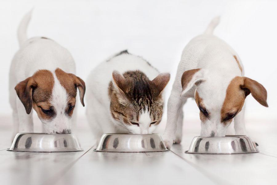 La importancia de la correcta alimentación para nuestros perros