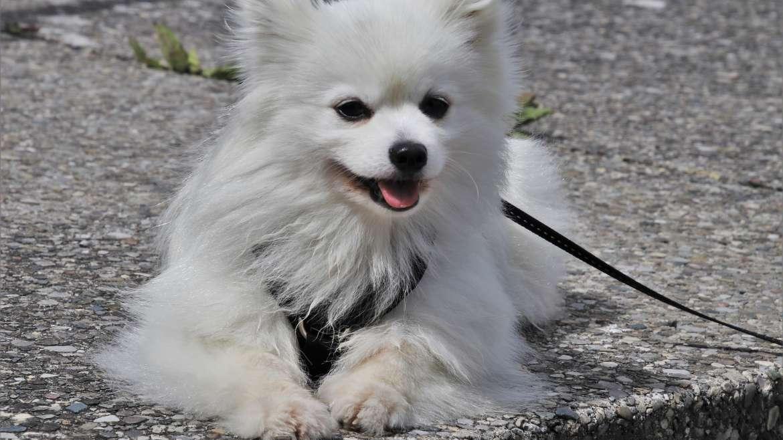 ¿Arnés o collar para tu perro? Te explicamos cuál es mejor