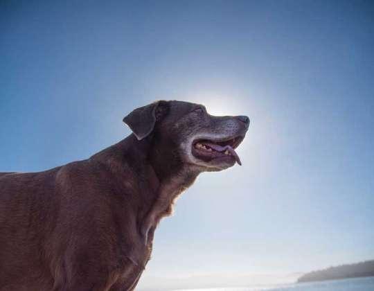 Cómo cuidar las articulaciones de nuestros perros en la vejez