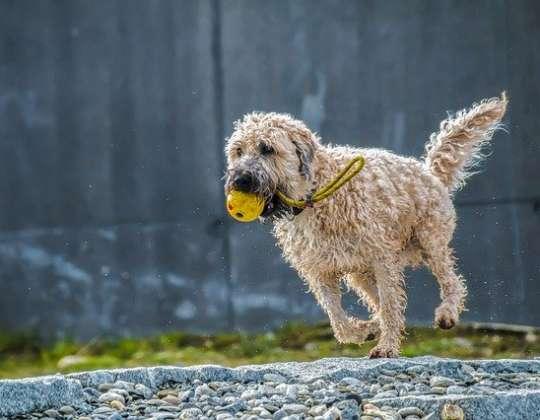 Cómo mantener el bienestar animal de nuestras mascotas durante el confinamiento