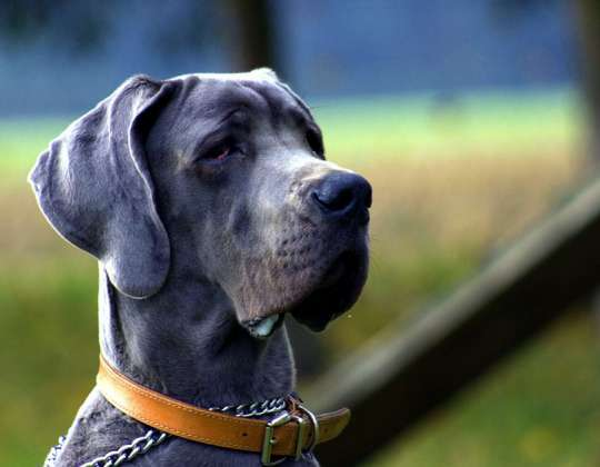 Lo que debes saber para cuidar a tu mascota de forma responsable